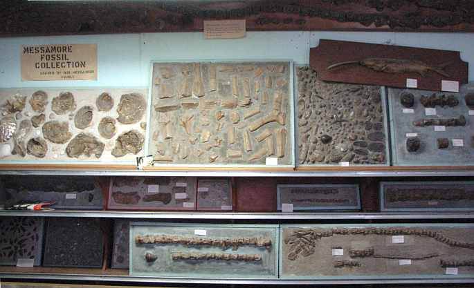 Messamore Fossil Collection in Kansas