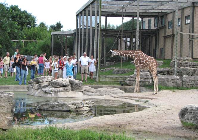 giraffe at Tanganyika Wildlife Park