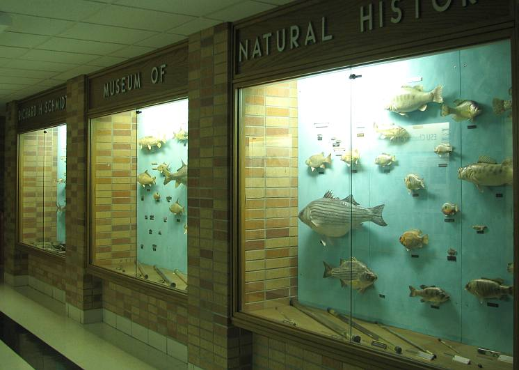 Kansas fish and reptile displays