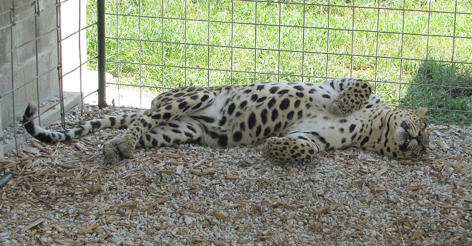Cedar Cove Feline Conservation Park & Education Center - Louisburg