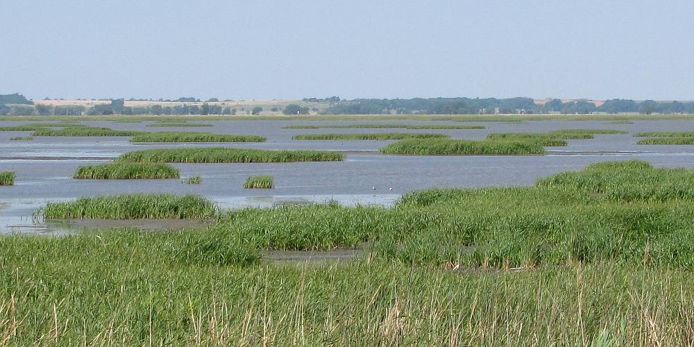 Marshland at Cheyenne Bottoms Wildlife Area