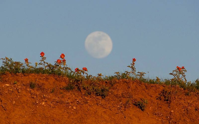 Super moon and wildflowers at Big Basin