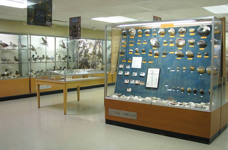 Schmidt Museum of Natural History - Emporia, Kansas